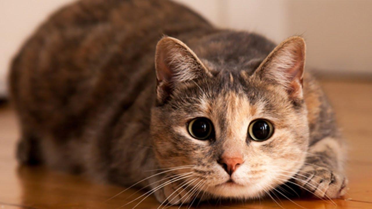 Kedi Sağlığı