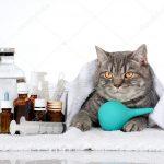 Kusan kediye ne yapılır